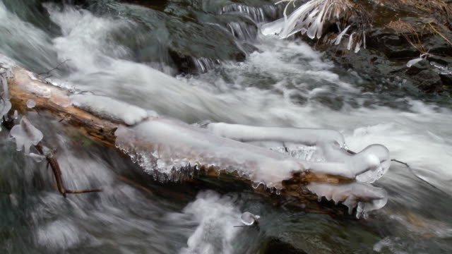 MS Frozen ice formed on log in stream / Madoc, Ontaria, Canada