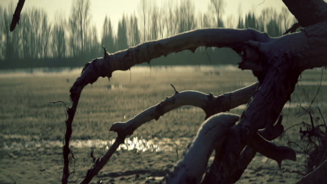 frozen landscape with old dead tree - assistive technology stock videos & royalty-free footage