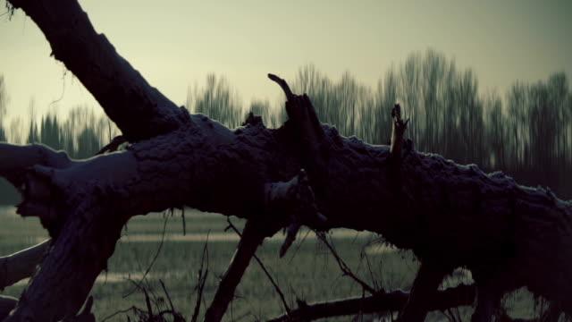 Frozen landscape with old dead tree