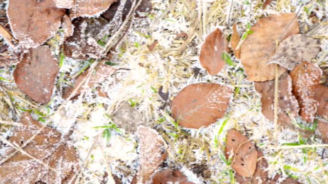 vídeos y material grabado en eventos de stock de hojas congeladas en otoño - glaseado para postres