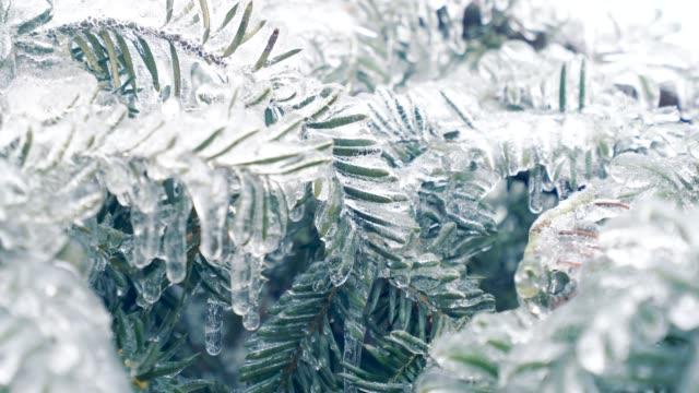 vídeos y material grabado en eventos de stock de congelados de pino. - rama
