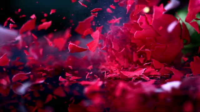 slo mo frozen red rose blossom shattering on black surface - flower stock videos & royalty-free footage