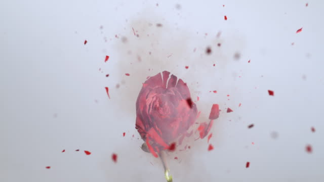 slo mo frozen red rose exploding - rose petal stock videos and b-roll footage