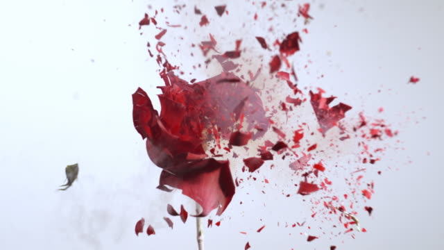 stockvideo's en b-roll-footage met slo mo frozen red rose exploding - bloemblaadje