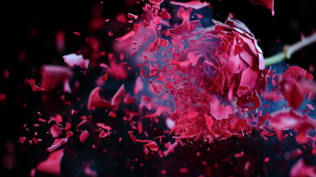 slo mo frozen red rose shatters on the black surface - breaking stock videos and b-roll footage