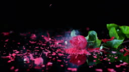 SLO MO LD Frozen red rose smashing on black surface