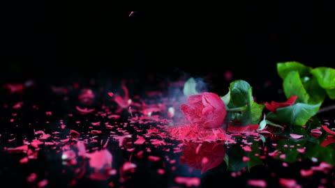 slo mo ld frozen red rose smashing on black surface - rose stock videos & royalty-free footage