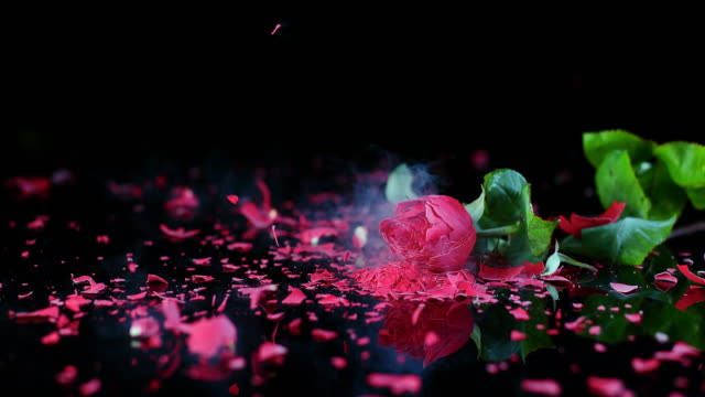 slo mo ld frozen red rose smashing on black surface - falling stock videos and b-roll footage