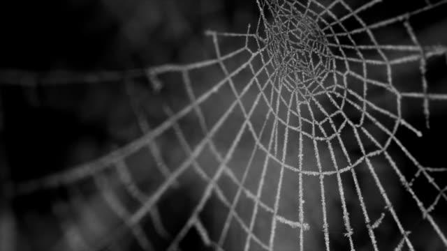 Gefrorene Spinnennetz (1080p