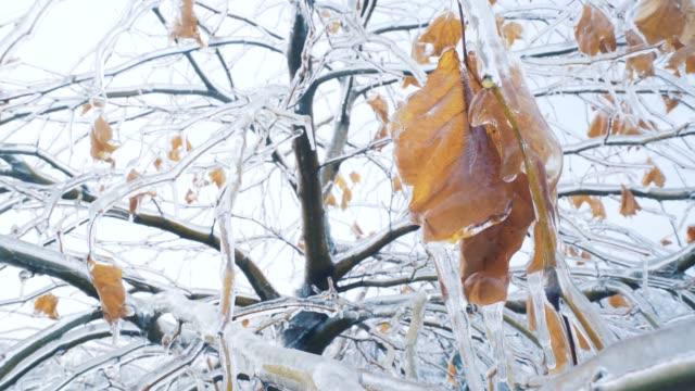 frozen tree. - frozen water stock videos & royalty-free footage