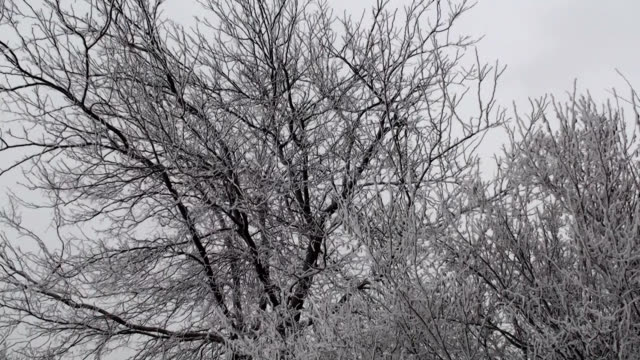 frozen trees in the wind - desaturated stock videos & royalty-free footage