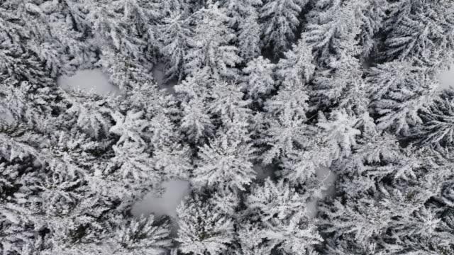 vídeos y material grabado en eventos de stock de video de stock de bosque de invierno congelado - nevosa