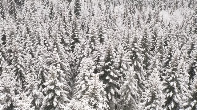 frozen winter forest - named wilderness area stock videos & royalty-free footage