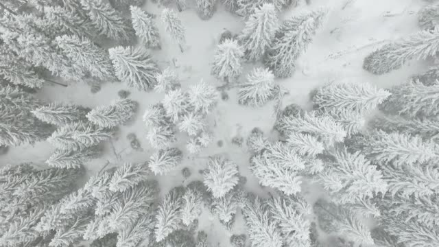 stockvideo's en b-roll-footage met bevroren winter forest - sneeuwstorm