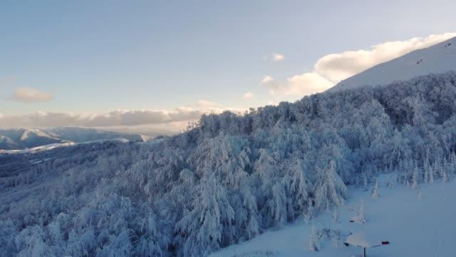 vídeos de stock e filmes b-roll de frozen winter mountain forest - pinheiro