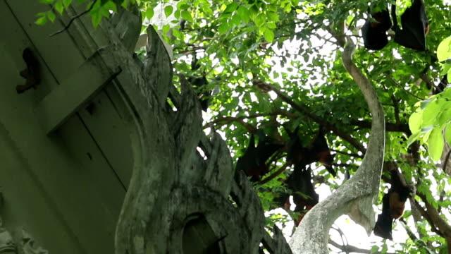 Flughund auf die tree