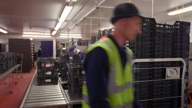 vídeos y material grabado en eventos de stock de fruit farm workers sort and package harvested strawberries in modern agricultural plant. - pila arreglo