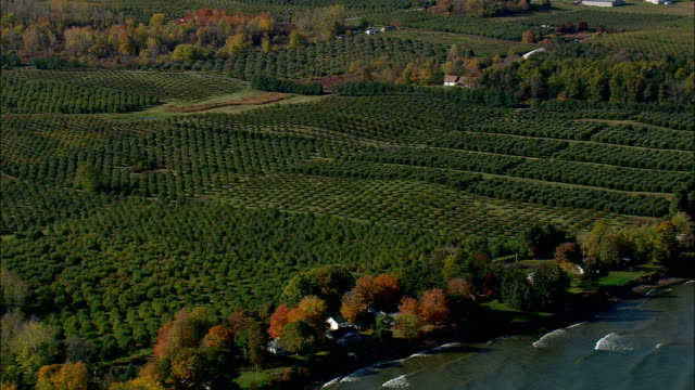 fruit farms  - aerial view - new york,  wayne county,  united states - pennsylvania stock videos and b-roll footage