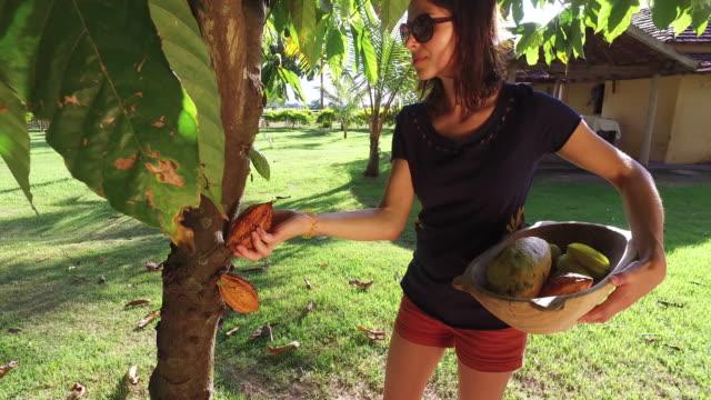 fruit picking - fruit bowl stock videos & royalty-free footage