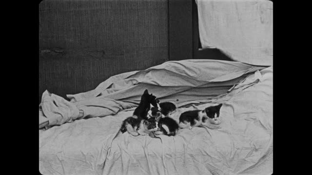 1920 frustrated policeman sneaks up on bed full of cats - duvet stock videos & royalty-free footage