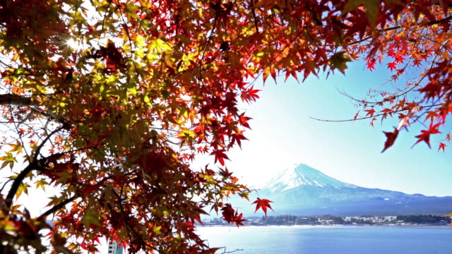 fujisan in koyo autumn at kawaguchiko lake yamanashi japan - maple tree stock videos and b-roll footage