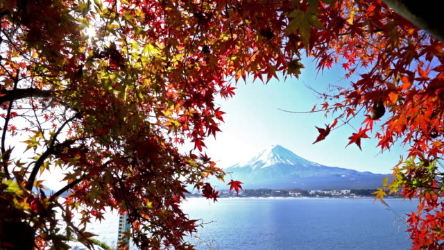 fujisan in koyo autumn at kawaguchiko lake yamanashi japan - maple leaf stock videos and b-roll footage