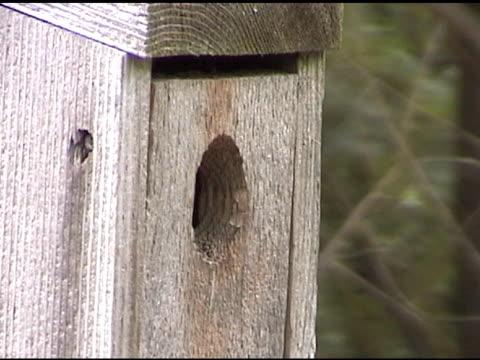 vídeos y material grabado en eventos de stock de casita de pájaros completo - grupo pequeño de animales