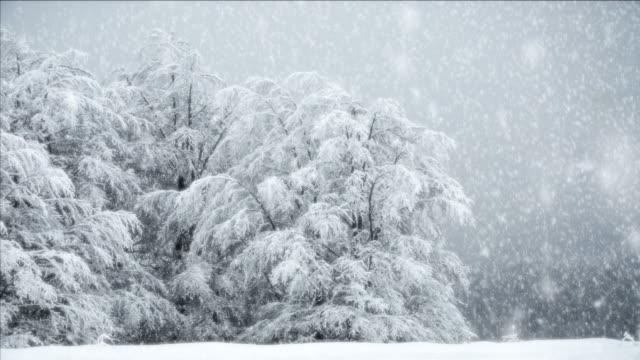 full hd ntsc -  snow fall seamless loop - snow cornice stock videos and b-roll footage