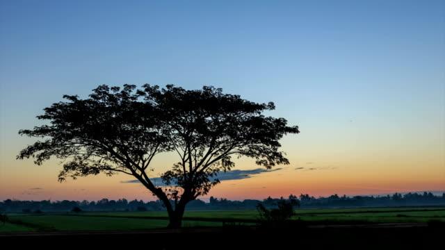 Volle HD-Zeitraffer: der Reis-Farm bei Sonnenaufgang am Morgen