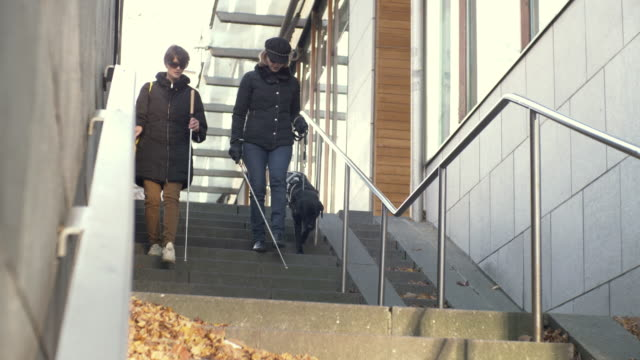 full length of visually disabled female friends walking down on steps with guide dog in city - visual impairment stock videos & royalty-free footage