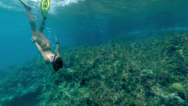 full length of young woman snorkeling over coral reef in blue sea, female tourist exploring while swimming in water - montego bay, jamaica - full length bildbanksvideor och videomaterial från bakom kulisserna