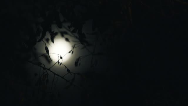 Full Moon amongst the trees