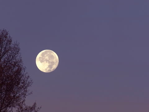 full moon and cottonwoods - cottonwood tree stock videos and b-roll footage