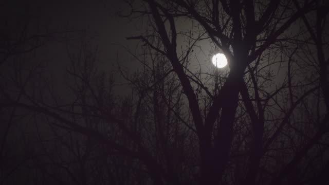 WS Full moon at night, Beijing, China