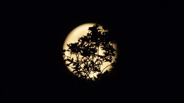 いくつかの木の枝の後ろに満月 - 枝点の映像素材/bロール