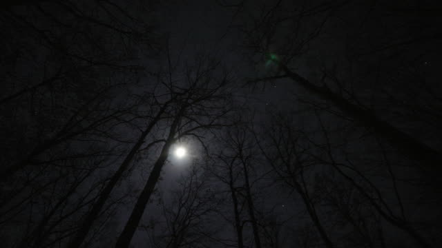 a full moon hovers over the forest in winter. - full moon stock videos & royalty-free footage