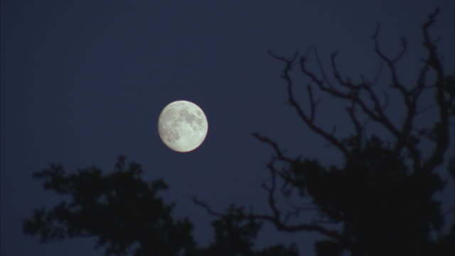 MS, Full moon in night sky, silhouettes of tree branches in foreground