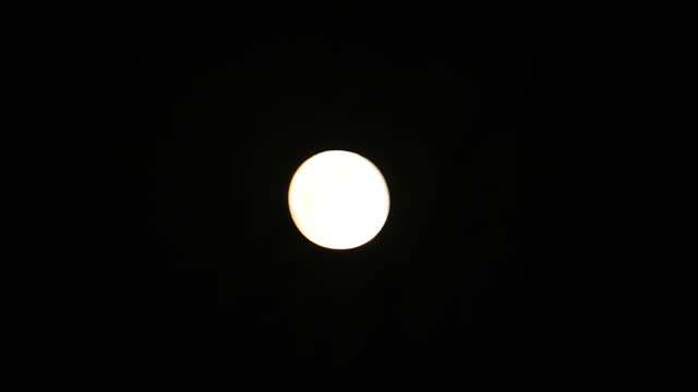 full moon is seen from a rural area on april 27, 2021 in feni, bangladesh. the pink super moon is the first of two super moons which will be visible... - bamboo plant stock videos & royalty-free footage