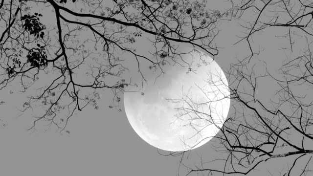 full moon night. trees silhouette. - midnight stock videos and b-roll footage