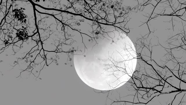 vídeos de stock, filmes e b-roll de noite de lua cheia. silhueta de árvores. - meia noite