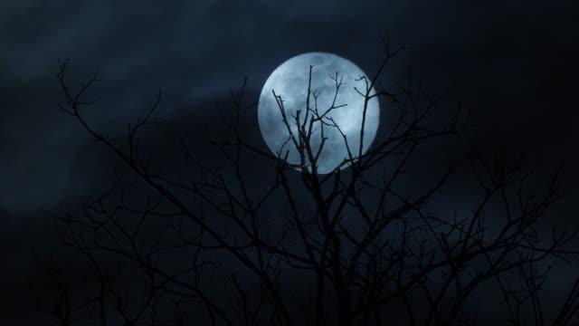 full moon night - mystery stock videos & royalty-free footage