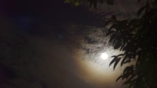 stockvideo's en b-roll-footage met nacht van de volle maan - graaf dracula