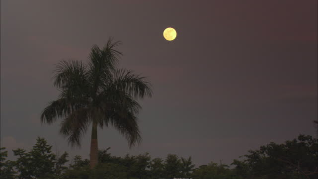 ms, full moon over palm tree, pinar del rio, cuba - lockdown stock videos & royalty-free footage
