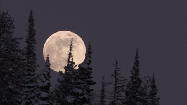 full moon rises over snowy conifer forest, yellowstone, usa - full moon stock videos & royalty-free footage