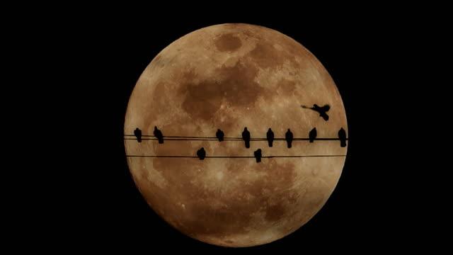 Fullmånen stiger bakom duvor