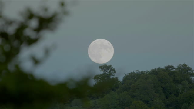 Full moon rising behind the forest at sunset