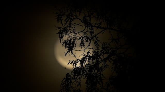 full moon rising behind trees - full moon stock videos & royalty-free footage