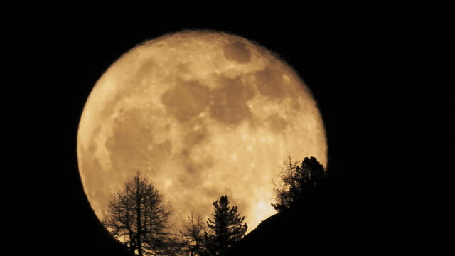 full moon rising behind trees - moon stock videos & royalty-free footage
