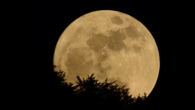 full moon rising behind trees - groß stock-videos und b-roll-filmmaterial