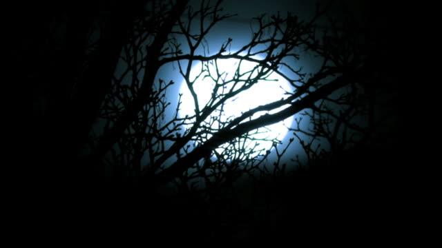 stockvideo's en b-roll-footage met t/l full moon rising behind winter tree - graaf dracula